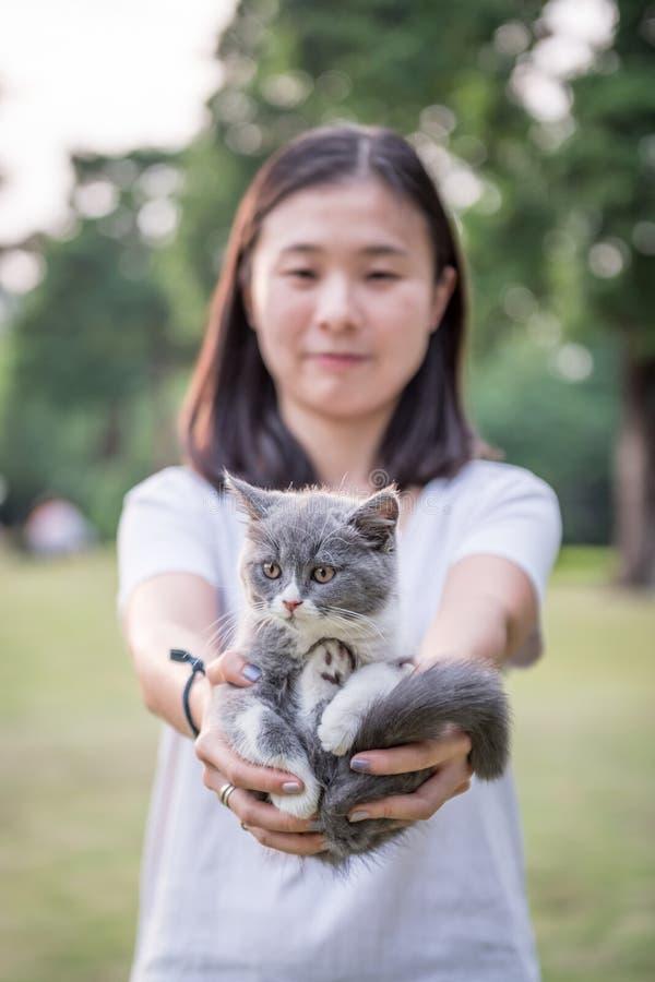 La muchacha con sus manos en un gatito gris foto de archivo