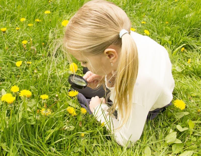 La muchacha considera la flor de los dientes de león a través de una lupa fotos de archivo