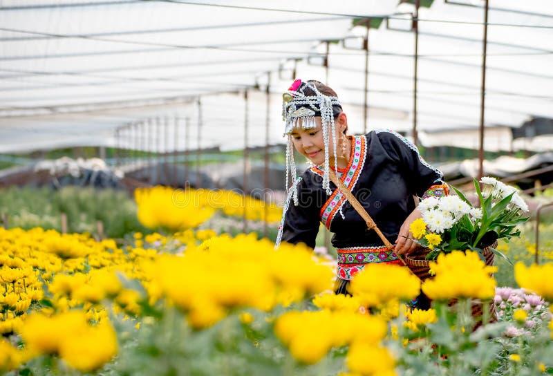 la muchacha de la Colina-tribu es flores amarillas de la colección en el jardín con la sonrisa y sostiene la cesta en mano izquie imágenes de archivo libres de regalías