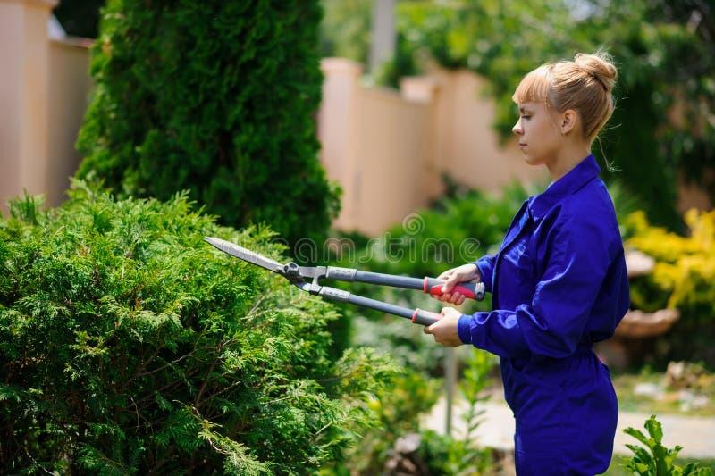 La muchacha del jardinero está cortando los arbustos con las tijeras imágenes de archivo libres de regalías