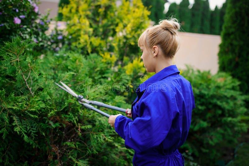 La muchacha del jardinero está cortando los arbustos con las tijeras imagen de archivo libre de regalías