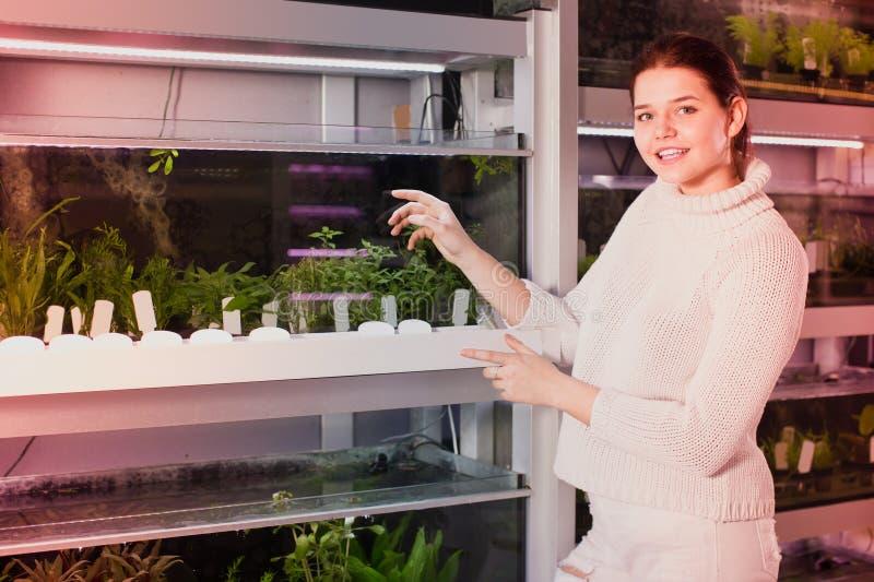 La muchacha elige algas del acuario imagen de archivo libre de regalías