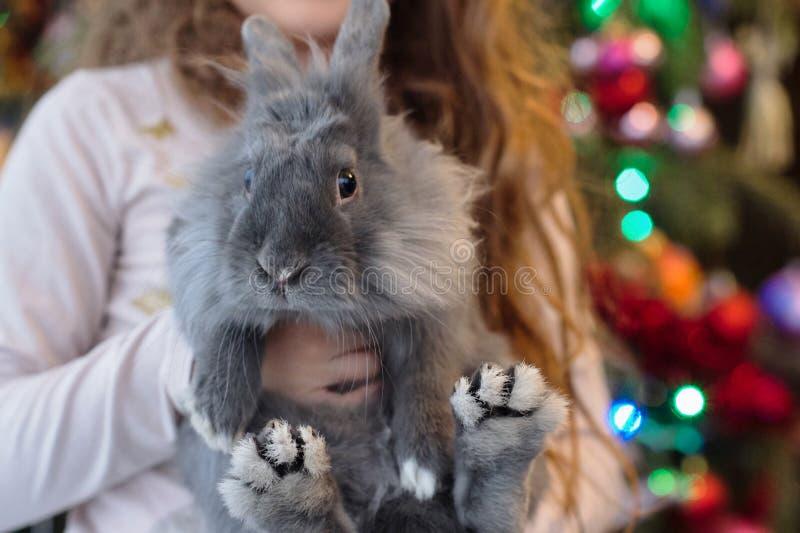 La muchacha está sosteniendo un pequeño conejo azul en sus manos La Navidad, retrato del conejo foto de archivo libre de regalías