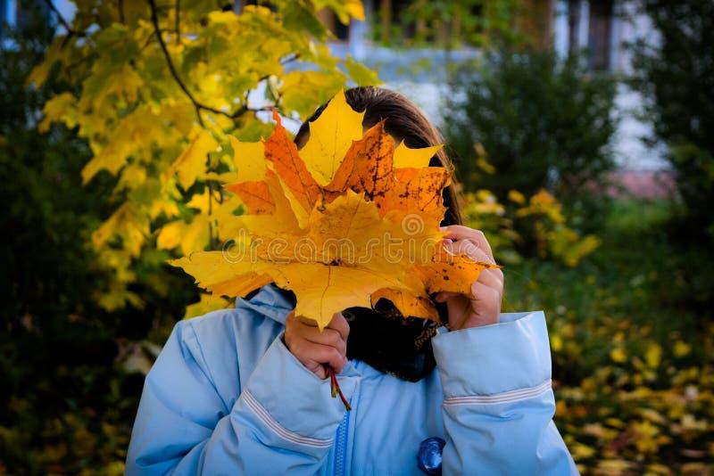 La muchacha está sosteniendo un ramo de hojas de arce del amarillo del otoño en h fotos de archivo