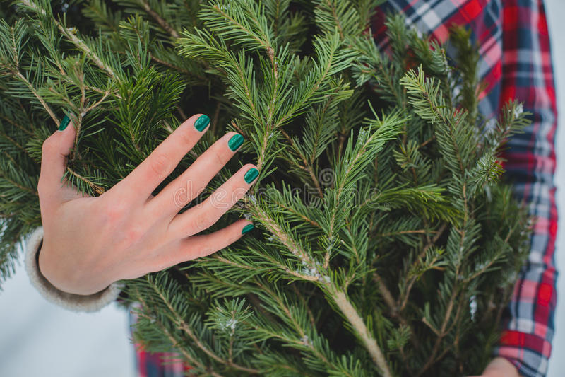 La muchacha mantiene ramas del abeto el bosque del invierno foto de archivo libre de regalías