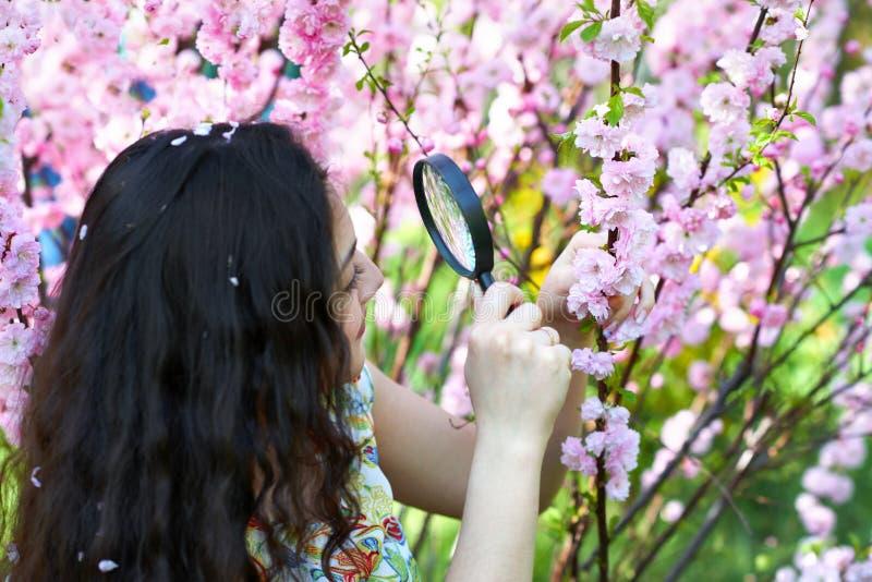 La muchacha mira a través de la lupa las flores rosadas, estudiando las plantas - concepto del entrenamiento y de la botánica foto de archivo