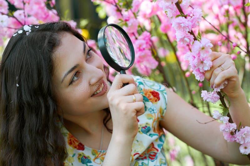 La muchacha mira a través de la lupa las flores rosadas, estudiando las plantas - concepto del entrenamiento y de la botánica foto de archivo libre de regalías