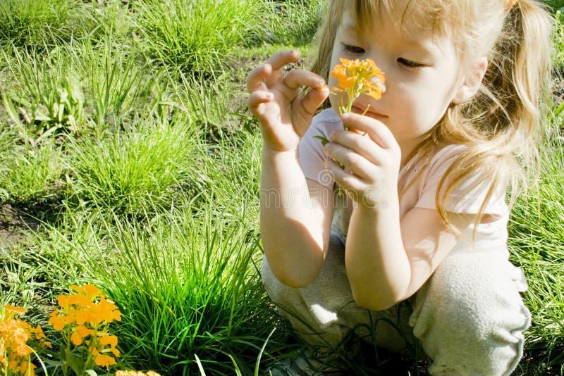 La muchacha mira una flor fotografía de archivo libre de regalías