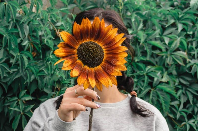 La muchacha oculta su cara detrás de un girasol imagenes de archivo