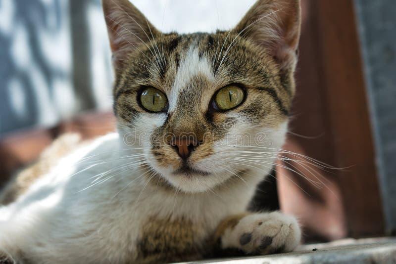 La muchacha perdida hermosa del gato, se cierra encima de imagen foto de archivo