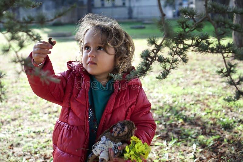 la muchacha rasga apagado un cono del pino de un árbol fotografía de archivo