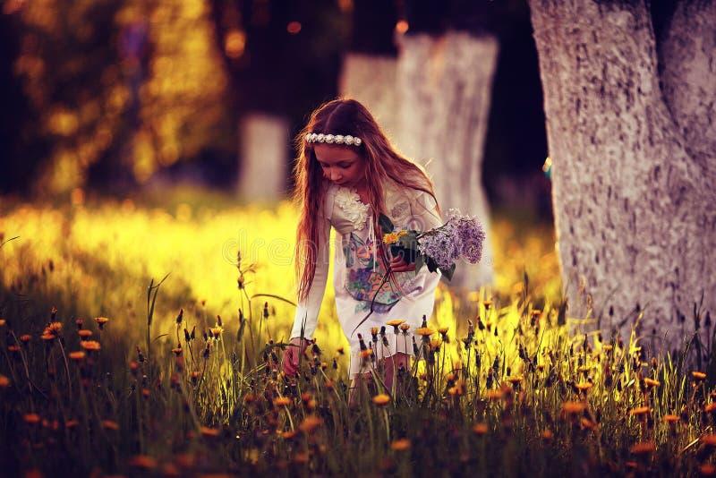 La muchacha recoge las flores imagen de archivo libre de regalías