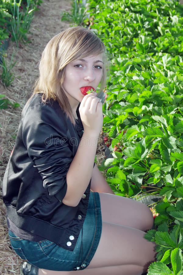 La muchacha recoge las fresas frescas foto de archivo libre de regalías