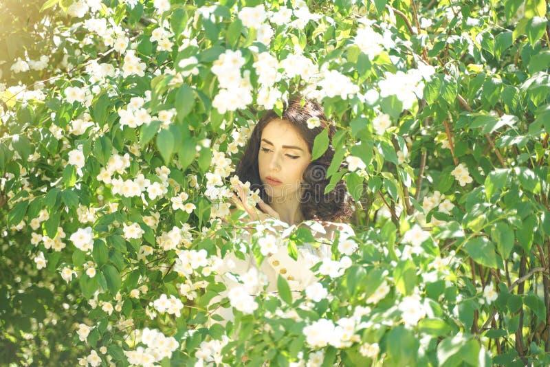 La muchacha se coloca entre los arbustos del jazmín e inhala la fragancia de flores fotografía de archivo