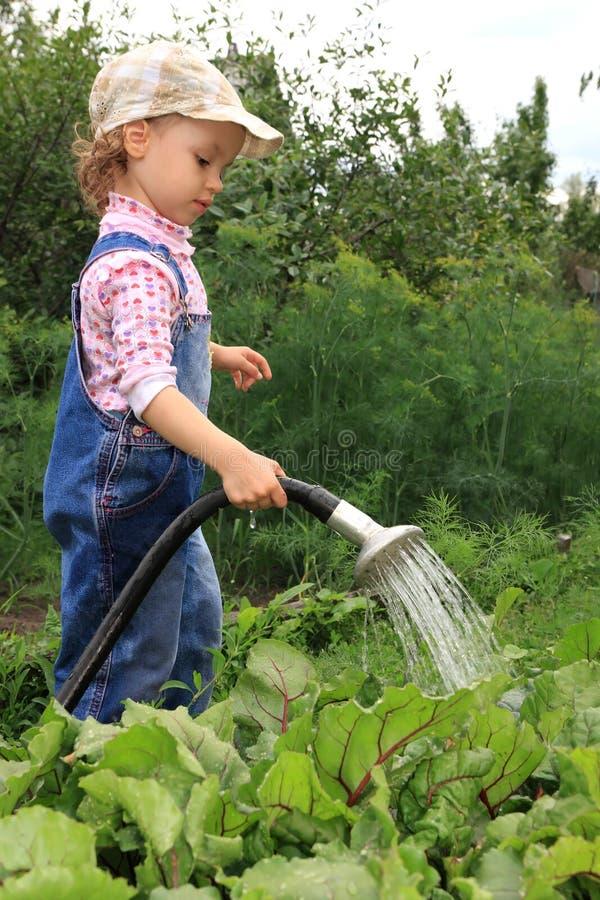 La muchacha vierte un jardín vegetal. fotografía de archivo libre de regalías
