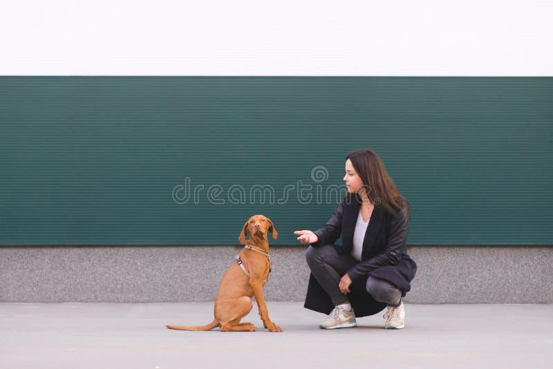 La muchacha y el perrito se sientan en el fondo de la pared El perro mira en la cámara El dueño y el perro lindo imagenes de archivo