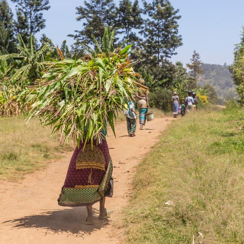 La mujer africana negra rural lleva un paquete de caña de azúcar cosechada en su cabeza imagenes de archivo