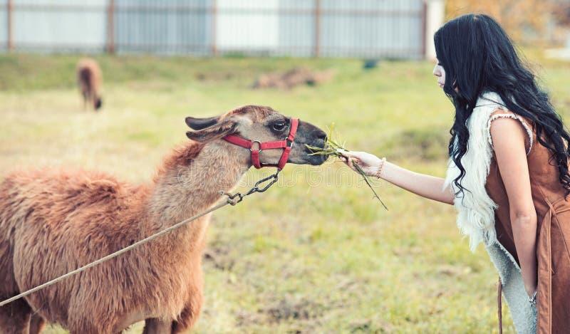 La mujer alimenta el camello camello que come de las manos de la muchacha bonita con el pelo moreno rizado largo al aire libre an imagen de archivo