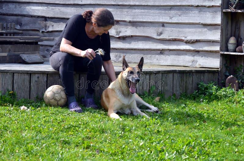La mujer cepilla su perro foto de archivo libre de regalías
