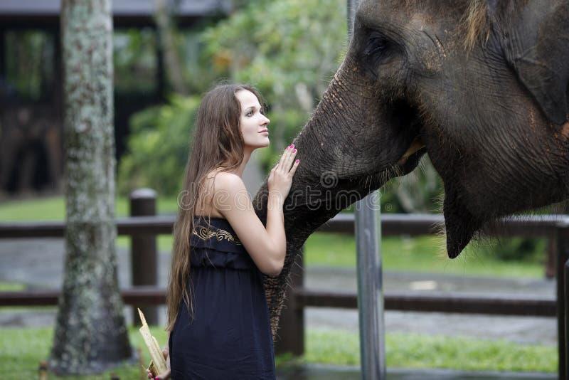 La mujer con el elefante, invitaciones, y le acaricia en el hocico, con fotografía de archivo