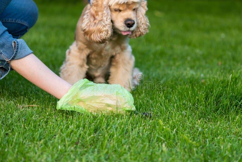 La mujer con el perro limpio de la bolsa de plástico cagó imagenes de archivo