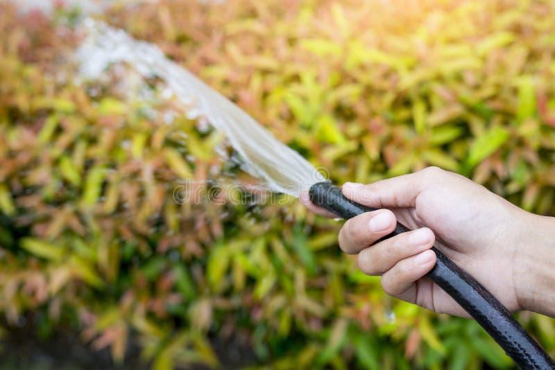 La mujer da el riego de la casa con la manguera del agua fotografía de archivo libre de regalías