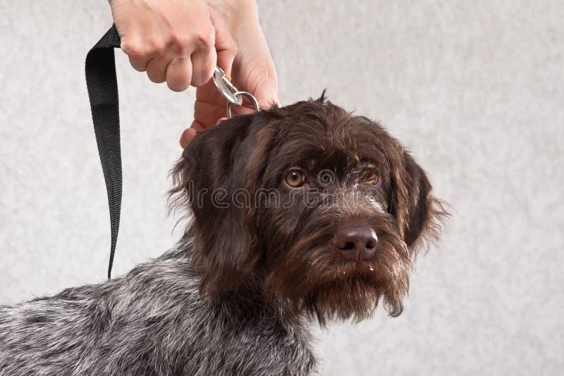 La mujer da la sujeción del correo al cuello del perro foto de archivo