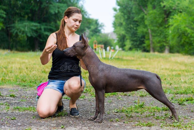 La mujer da un comando a su perro sin pelo mexicano Entrenamiento del perro imagen de archivo
