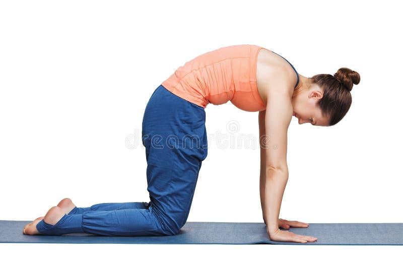 La mujer deportiva hermosa del yogini del ajuste practica marjariasana del asana de la yoga fotografía de archivo