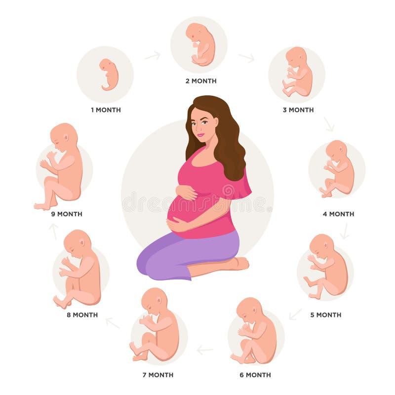 La mujer embarazada y el desarrollo embrionario mes a mes completan un ciclo a partir 1 a 9 meses al nacimiento con los iconos de stock de ilustración