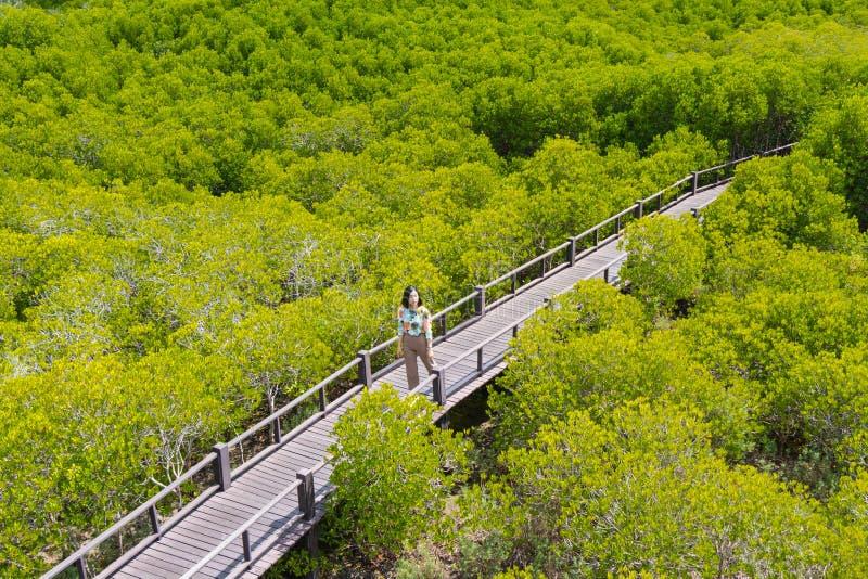 La mujer está caminando en el campo tagal de los ceriops imagenes de archivo