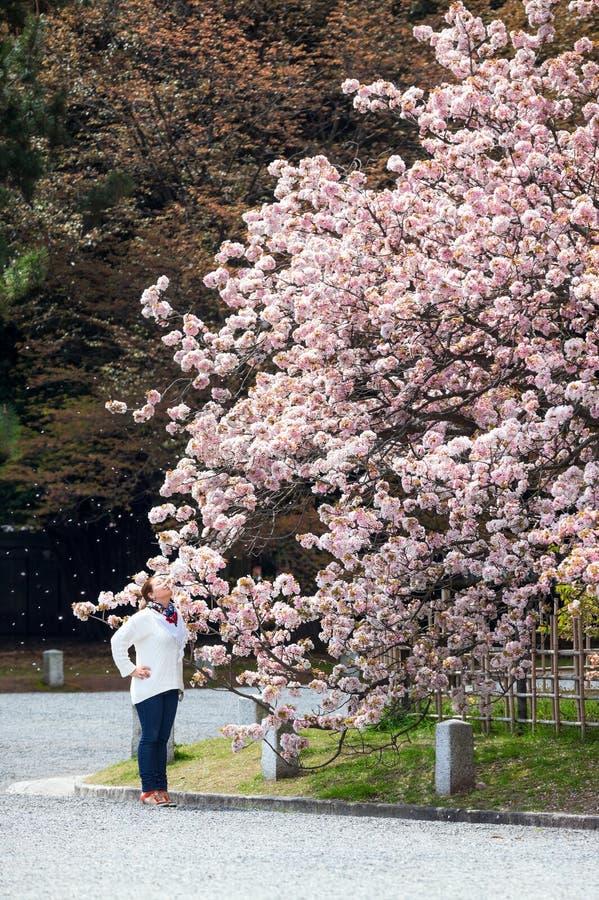 La mujer europea huele las flores del árbol floreciente de Sakura en el jardín central de Kyoto, Japón foto de archivo