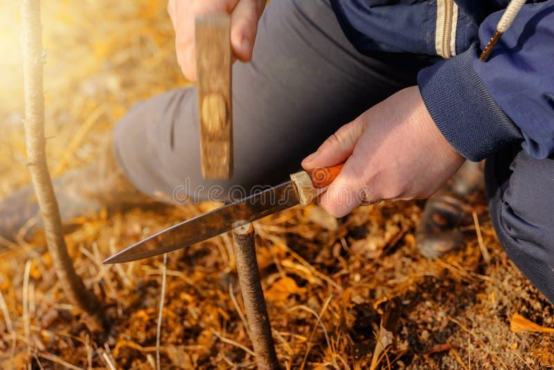 La mujer hace una grieta en el ?rbol joven nuevamente cortado para su vacunaci?n con un cuchillo y un martillo fotografía de archivo libre de regalías
