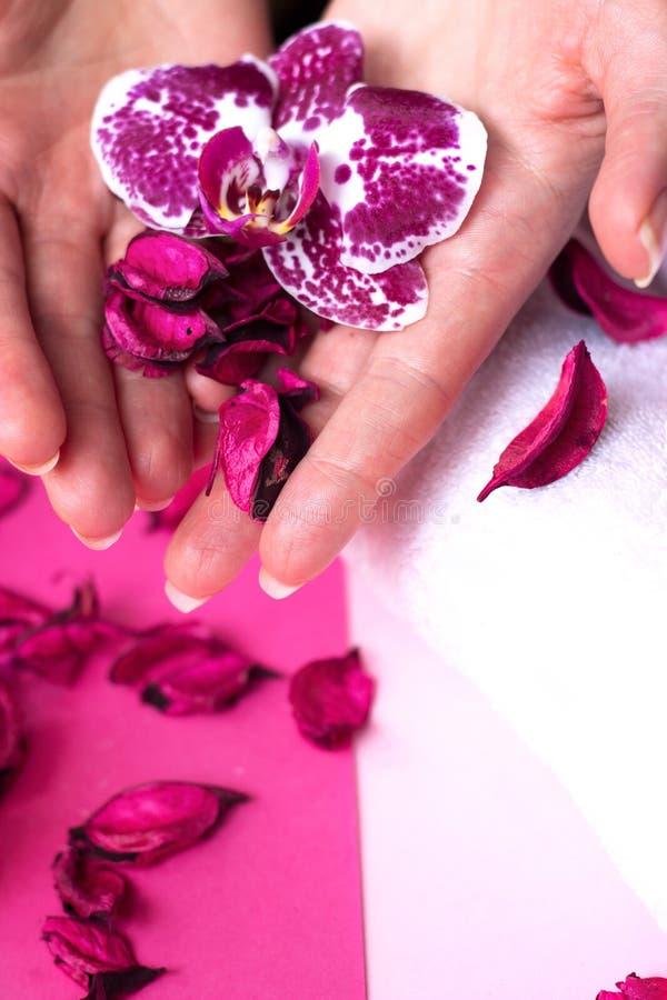 La mujer hermosa da sostener una flor de la orquídea, en backgrou rosado foto de archivo libre de regalías