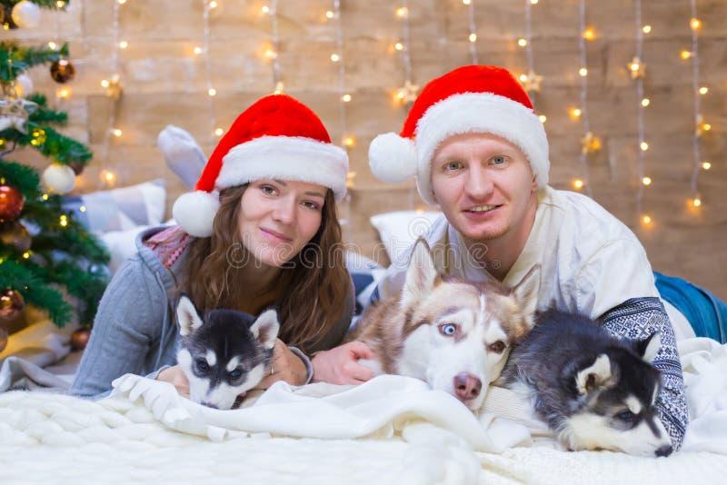 La mujer, hombre, persigue el perro esquimal, árbol de navidad, sombrero fotografía de archivo libre de regalías
