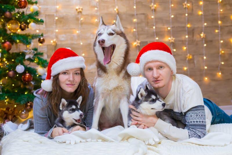 La mujer, hombre, persigue el perro esquimal, árbol de navidad, sombrero imagen de archivo libre de regalías