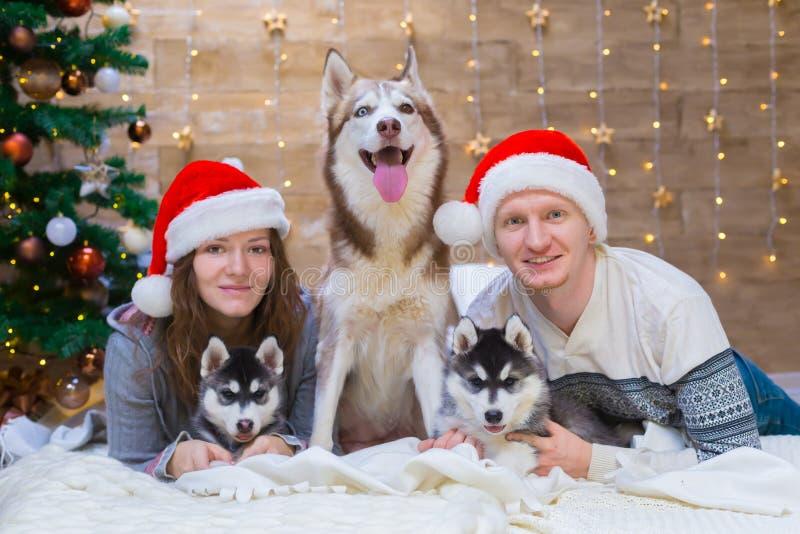 La mujer, hombre, persigue el perro esquimal, árbol de navidad, sombrero fotos de archivo libres de regalías