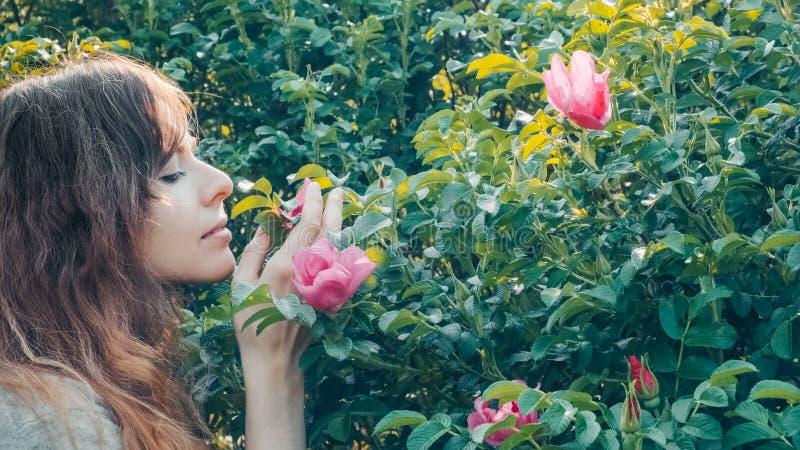 La mujer joven bonita romántica con la muchacha del pelo rizado huele el olor blando de rosas salvajes formato del 16:9 imagenes de archivo