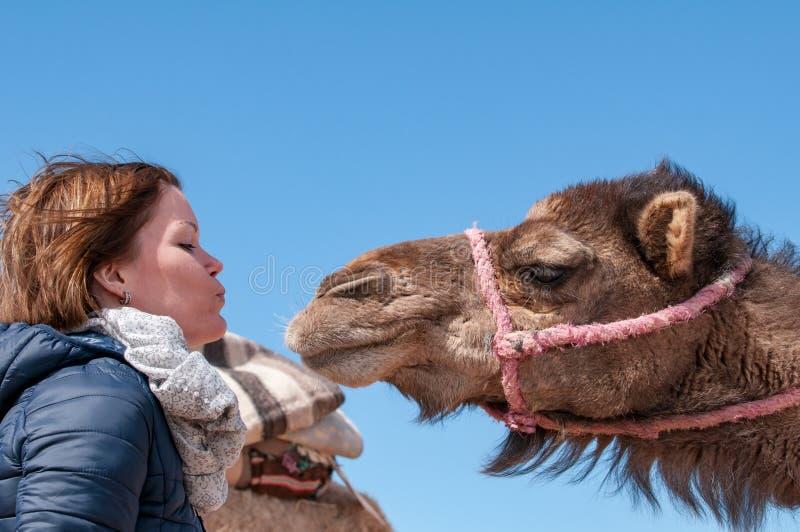 La mujer joven cayó en amor con el dromedario en Marruecos foto de archivo libre de regalías