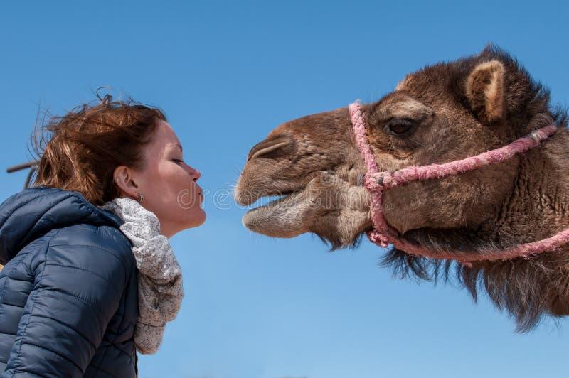 La mujer joven cayó en amor con el dromedario en Marruecos imagen de archivo libre de regalías
