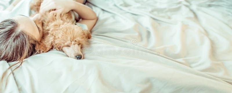 La mujer joven es de mentira y durmiente con el perro de caniche en cama fotos de archivo