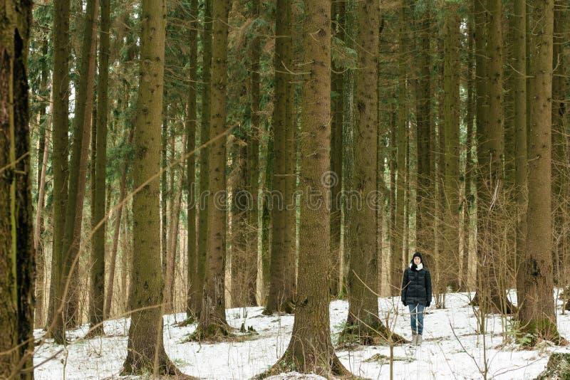 La mujer joven le gusta un árbol foto de archivo libre de regalías