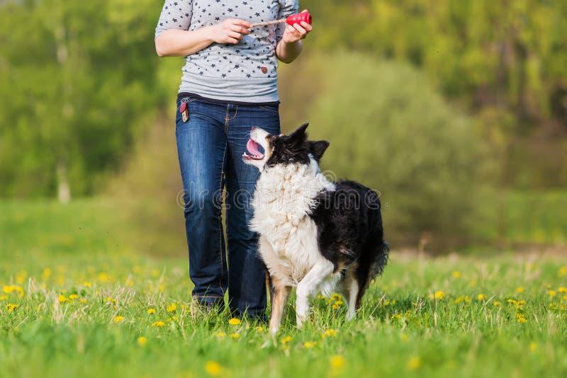 La mujer juega con un border collie en el prado fotografía de archivo libre de regalías