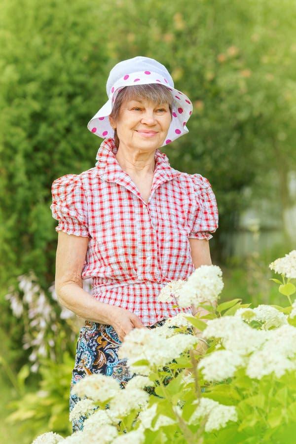 La mujer madura sonriente se coloca en el arbusto de la hortensia blanca fotografía de archivo