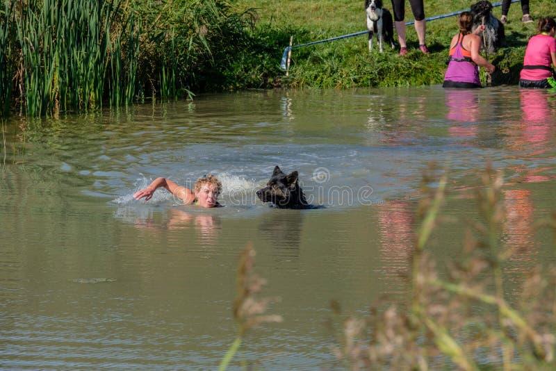 La mujer nada con su perro del sheperd en el canal en el perro feliz s fotos de archivo libres de regalías