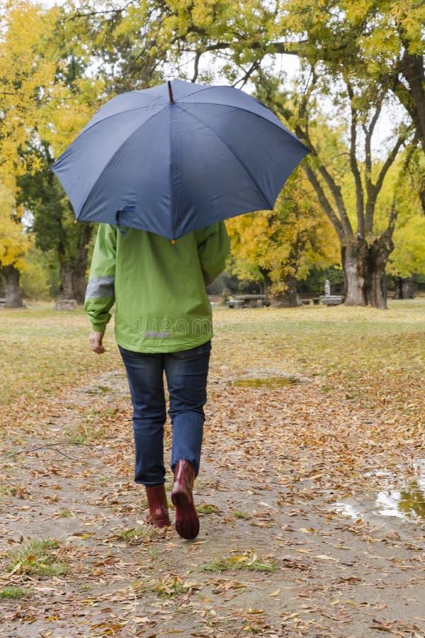 La mujer que camina con un paraguas en un parque con amarillo deja caer de árboles foto de archivo