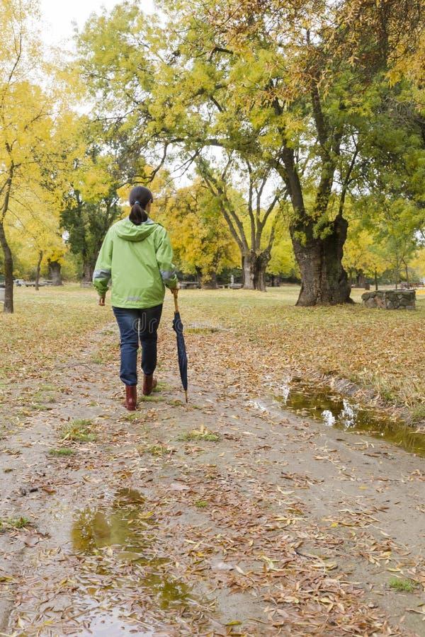 La mujer que camina con un paraguas en un parque con amarillo deja caer de árboles imagen de archivo