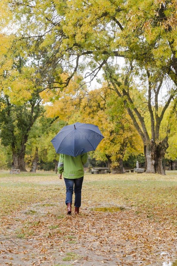 La mujer que camina con un paraguas en un parque con amarillo deja caer de árboles imagenes de archivo