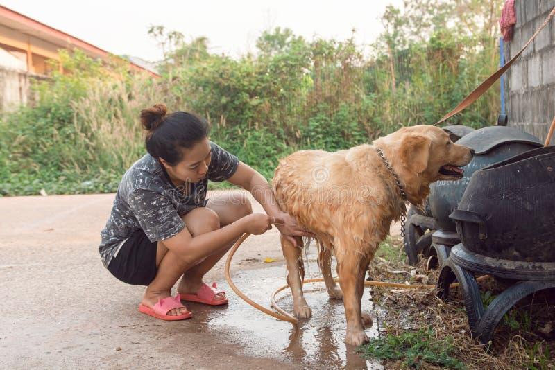 La mujer que se baña relaja el golden retriever del perro al aire libre imagen de archivo