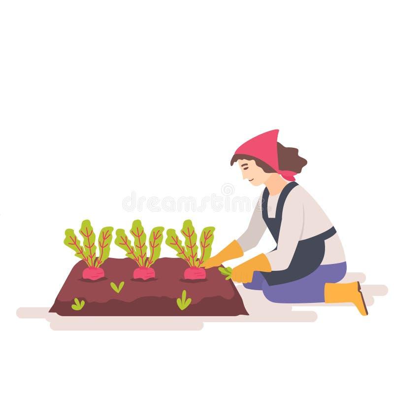 La mujer quita malas hierbas de la cama del jardín stock de ilustración